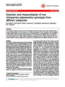 Detection and characterization of two chimpanzee polyomavirus ...