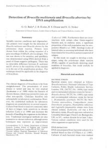Detection of Brucella melitensis and Brucella abortus by