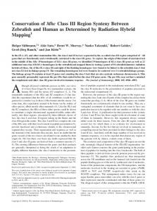 Determined by Radiation Hybrid Mapping Synteny Between Zebrafish ...