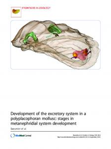 Development of the excretory system in a ... - Open Access LMU