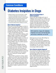 Diabetes Insipidus in Dogs