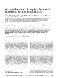Dictyostelium RasD is required for normal phototaxis, but not ...