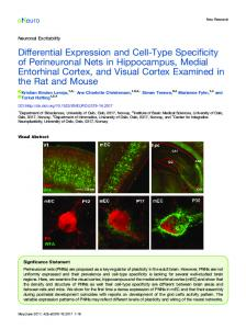 Differential Expression and Cell-Type Specificity of ... - eNeuro