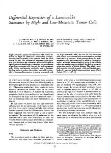 Differential expression of a lamininlike substance by high-and low ...