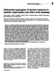 Differential expression of laminin isoforms in diabetic ...