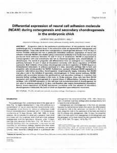 Differential expression of neural cell adhesion molecule (NCAM ...
