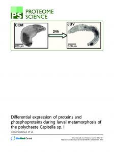 Differential expression of proteins and phosphoproteins during ... - Core