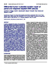 Differential human nucleotide excision repair of ... - BioMedSearch