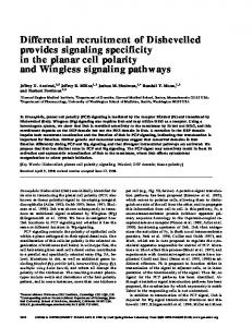 Differential recruitment of Dishevelled provides signaling specificity in ...