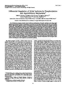 Differential Regulation of B-Raf Isoforms by Phosphorylation and ...