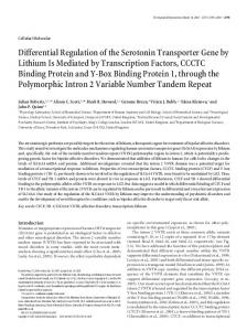 Differential Regulation of the Serotonin Transporter Gene by Lithium Is ...