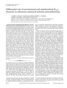 Differential role of sarcolemmal and mitochondrial KATP channels in ...