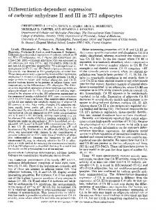 Differentiation-dependent expression of carbonic anhydrase II and III ...