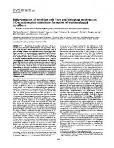 Differentiation of myoblast cell lines and biological methylation: 3 ...