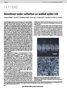 Directional water collection on wetted spider silk