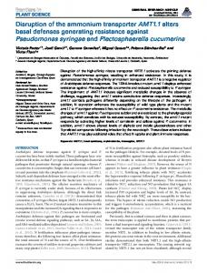 Disruption of the ammonium transporter AMT1.1 ... - BioMedSearch