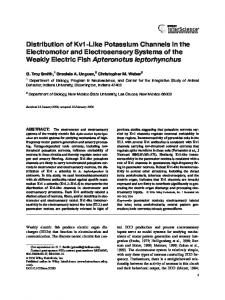Distribution of Kv1-like potassium channels in the electromotor and ...