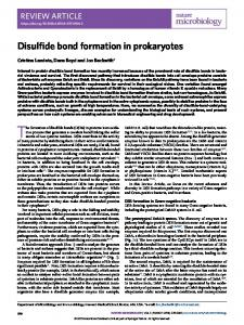 Disulfide bond formation in prokaryotes