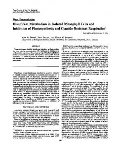 Disulfiram Metabolism in Isolated Mesophyll Cells and ... - NCBI