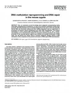 DNA methylation reprogramming and DNA repair in the mouse zygote
