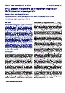 DNA–protein interactions at the telomeric repeats of ... - BioMedSearch