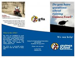Do you have questions about raising Guinea Fowl ?