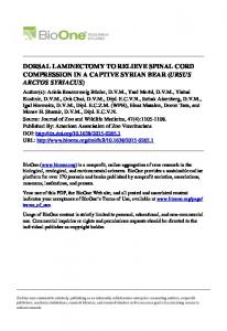 dorsal laminectomy to relieve spinal cord ...