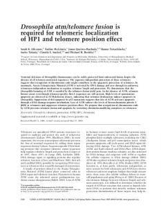 Drosophila atm/telomere fusion is required for telomeric localization of ...