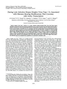 During Lytic Infection Herpes Simplex Virus Type ... - Journal of Virology