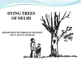 DYING TREES OF DELHI - India Water Portal