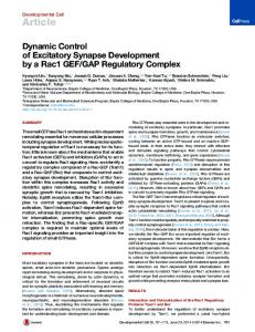 Dynamic Control of Excitatory Synapse Development by a ... - Cell Press