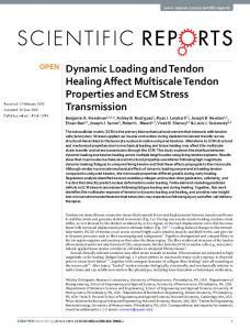 Dynamic Loading and Tendon Healing Affect