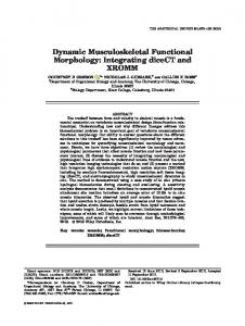 Dynamic Musculoskeletal Functional ... - Wiley Online Library