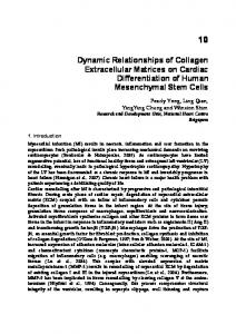 Dynamic Relationships of Collagen Extracellular ...