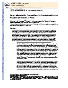 Dynein Is Required for Polarized Dendritic Transport and Uniform ...