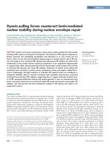 Dynein pulling forces counteract lamin-mediated nuclear stability ...