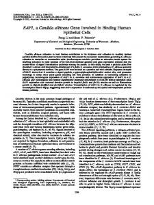 EAP1, a Candida albicans Gene Involved in Binding ... - Eukaryotic Cell