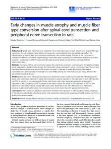 Early changes in muscle atrophy and muscle fiber type conversion ...