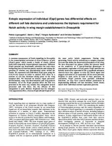 Ectopic expression of individual E (spl) genes has differential effects ...