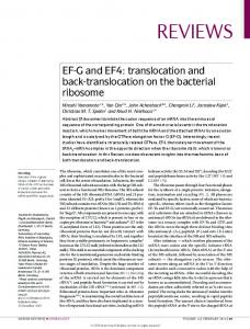 EF-G and EF4: translocation and back-translocation ...