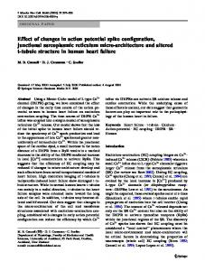 Effect of changes in action potential spike configuration ... - Springer Link