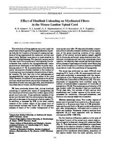 Effect of Hindlimb Unloading on Myelinated Fibers in ... - Springer Link