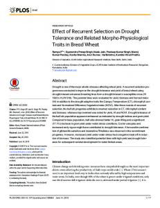 Effect of Recurrent Selection on Drought Tolerance