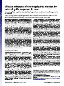 Effective inhibition of cytomegalovirus infection by external ... - PNAS