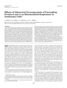 Effects of Adenoviral Overexpression of Uncoupling Protein-2 and -3