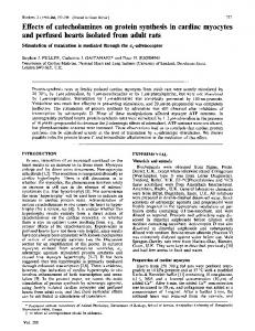 Effects of catecholamines on protein synthesis in