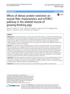 Effects of dietary protein restriction on muscle fiber ... - Core