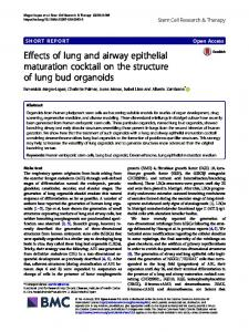 Effects of lung and airway epithelial maturation cocktail on the ...