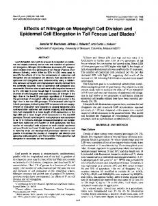 Effects of Nitrogen on Mesophyll Cell Division and Epidermal ... - NCBI