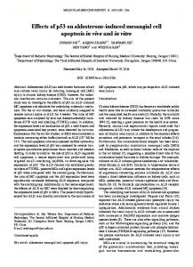 Effects of p53 on aldosterone-induced mesangial
